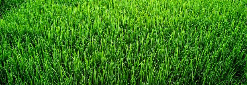 Живой газон на могилу