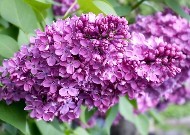 Живые цветы на могилу