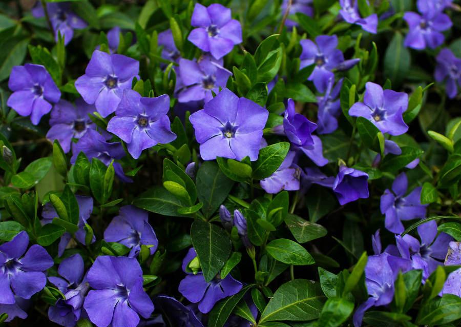 Посадить цветы на могиле